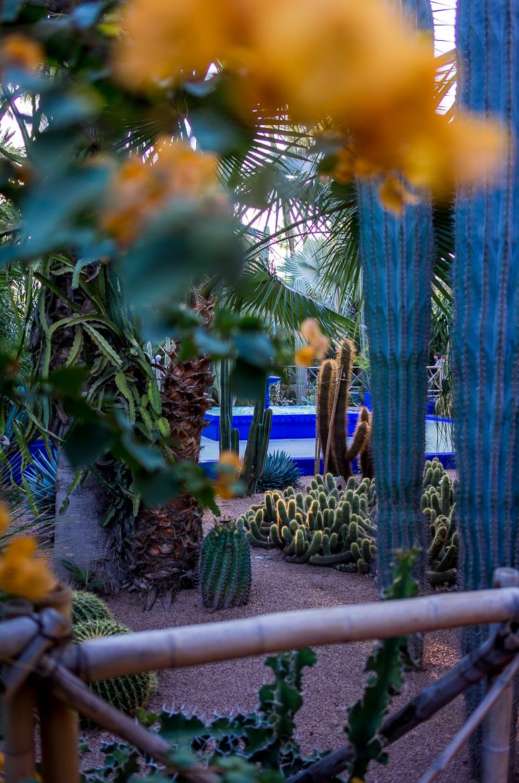Travel photography Marrakesh Jardin Majorelle