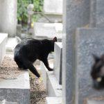 Gatti Cimitero Monumentale Milano